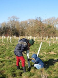 freeing the trees on a glorious Sunday in Feb 2018
